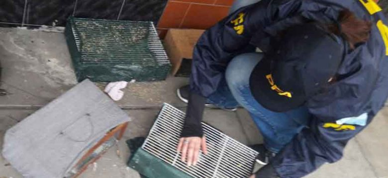 Rescatan animales silvestres en Feria de Pompeya