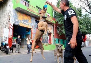 Los perros rescatistas entrenados por los Bomberos