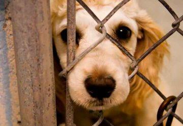 Imponen severas multas por maltrato animal en la Ciudad