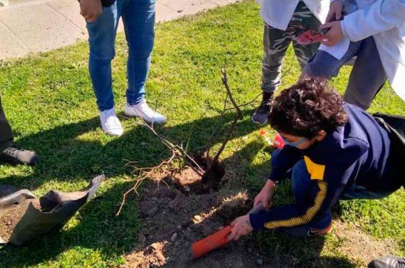 Plantar Conciencia: Plantación de árboles nativos