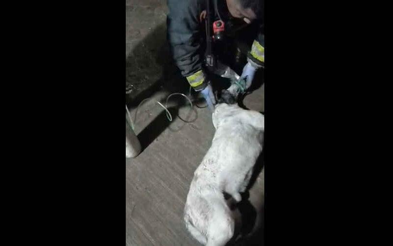 Bomberos rescataron a un perro de un incendio y tuvieron que darle oxígeno